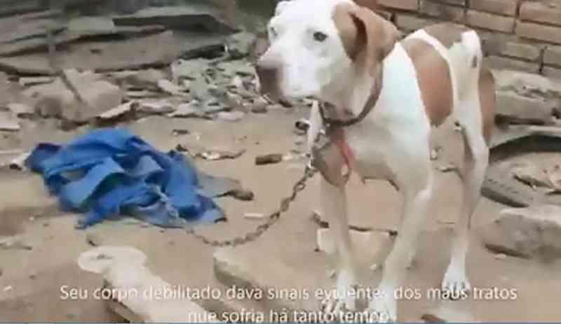 ONG Patas Amigas realiza resgate de cães no Jardim Califórnia II, em Passos, MG