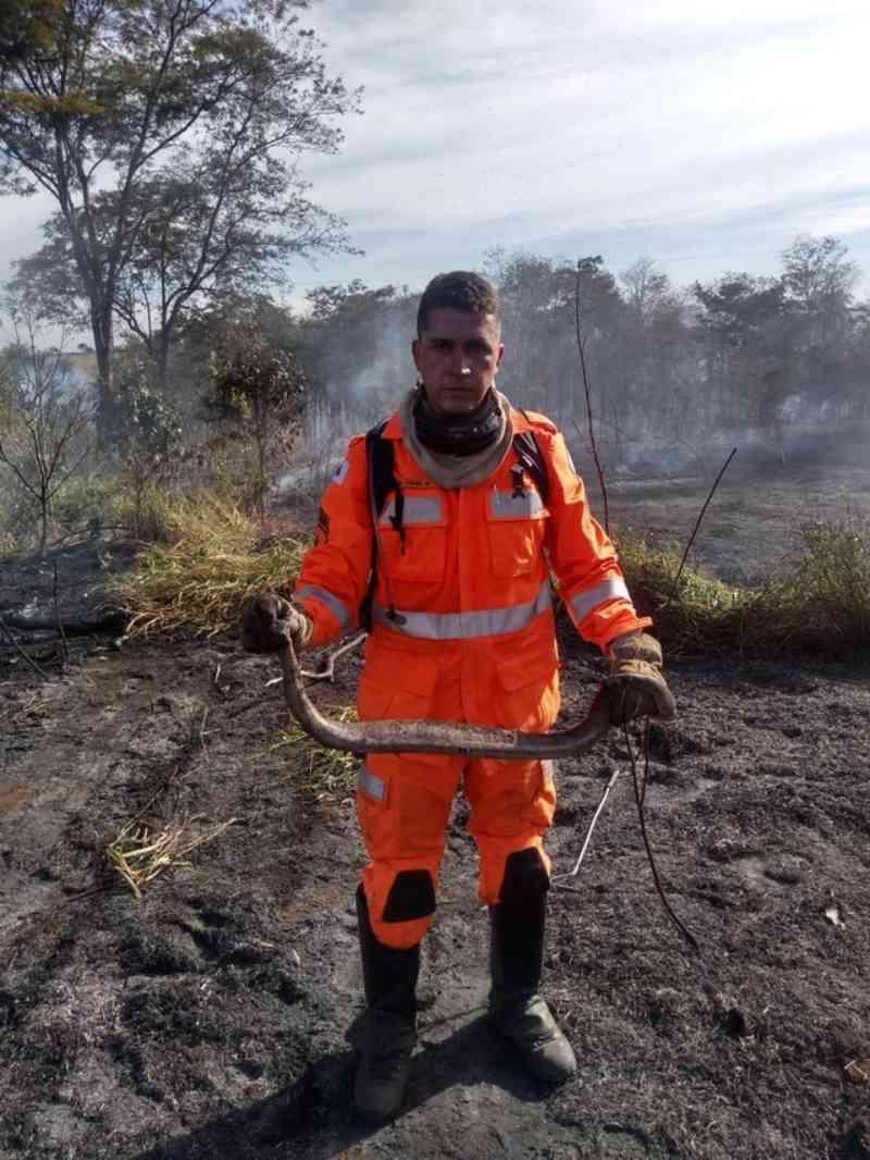 Animais morrem durante incêndio em vegetação na AMG-2595 em Uberaba, MG
