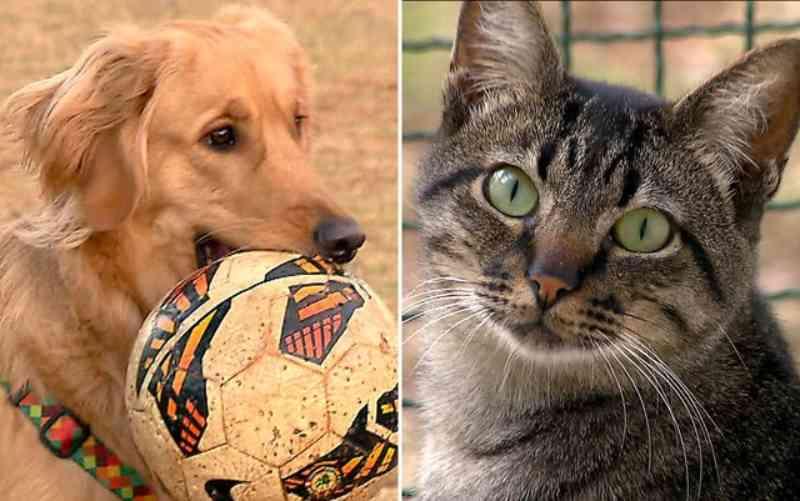 Prefeitura de Uberaba (MG) inicia a campanha de agasalhos para animais 'Eles também sentem frio'