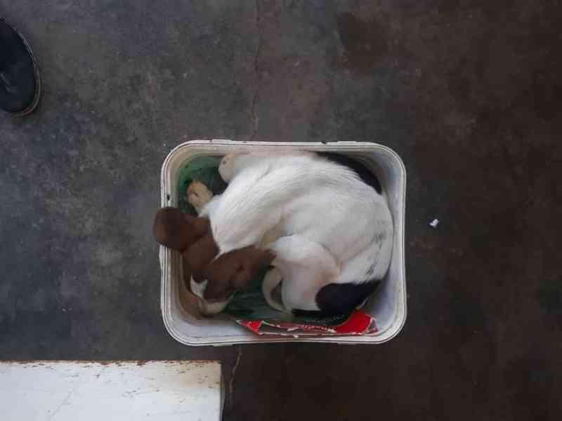 Idoso entrega filhote de cachorro doente após ser denunciado por maus-tratos