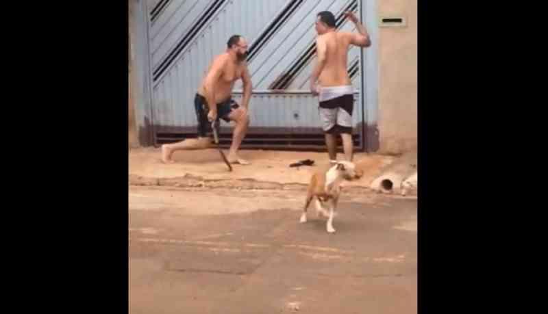 Guarda municipal de Campo Grande (MS) que atirou em cachorro será investigado, garante secretaria