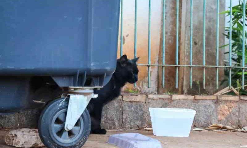 Prefeitura de Campo Grande (MS) pede doações para 'banco de ração' que alimentará animais resgatados