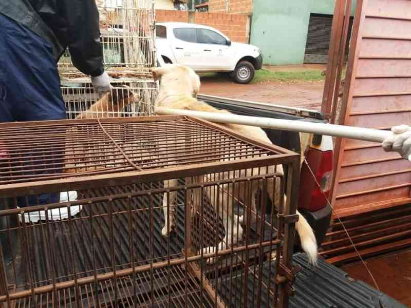 Fiscais do CCZ recolhem animais que sofriam maus-tratos em residência de Dourados, MS