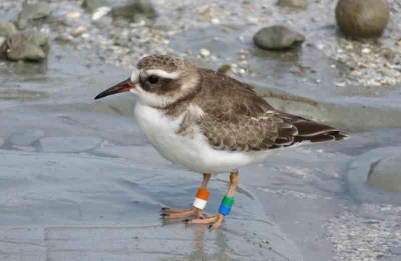 Aves mudam comportamento durante quarentena na Nova Zelândia