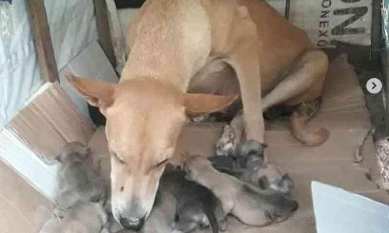 Grupo de proteção aos animais denuncia envenenamento de cães em Cajazeiras, PB