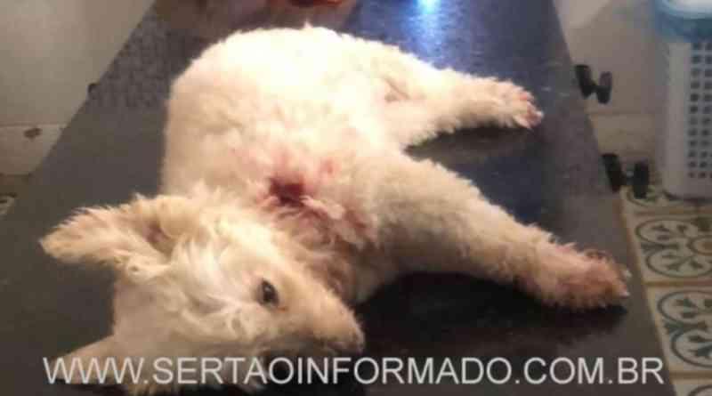 Homem mata cachorro com golpe de faca em Sousa, PB