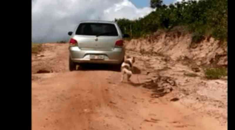 Motorista arrasta cão e polícia vai investigar crime de maus-tratos em Santa Luzia, PB; vídeo