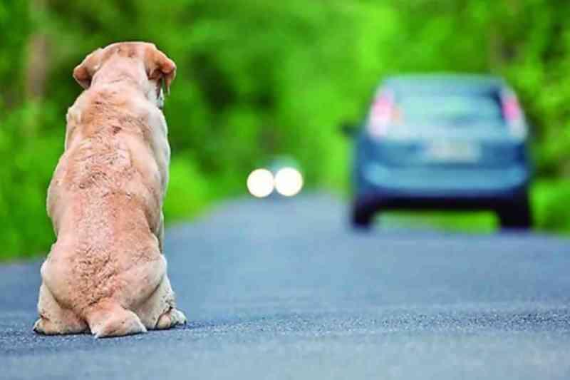 Vereadores aprovam projeto de lei que prevê multa em casos de abandono animal em Caruaru, PE