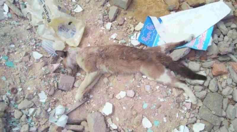 Polícia investiga envenenamento de gatos no bairro Vila Mocó, em Petrolina, PE