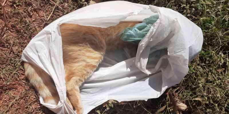 Moradores denunciam envenenamento de gatos em Corrente, PI