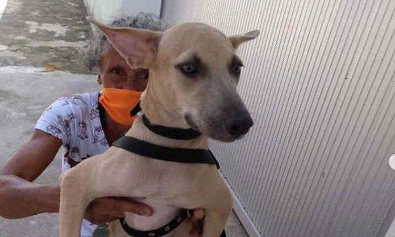 Sob ameaça de despejo, faxineira ganha casa após querer doar animais em Teresina