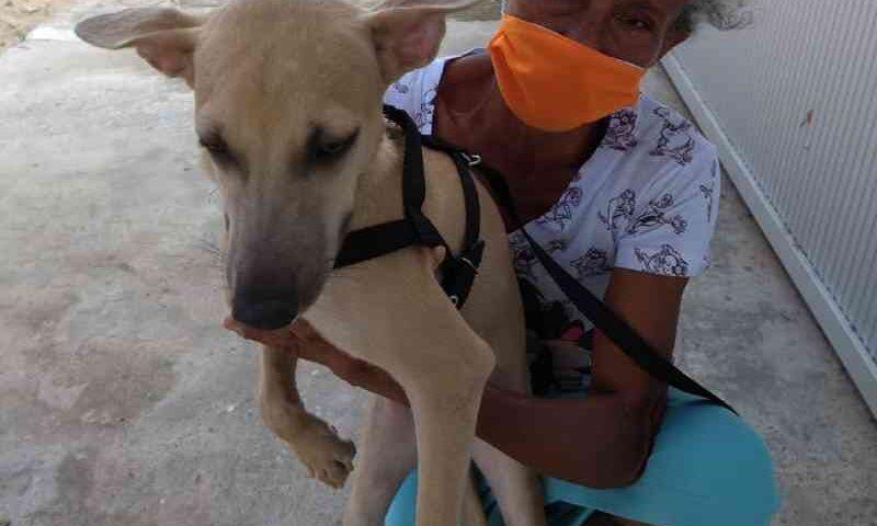 Sem renda e com risco de morar na rua, faxineira busca abrigo para seus cães e gatos em Teresina, PI