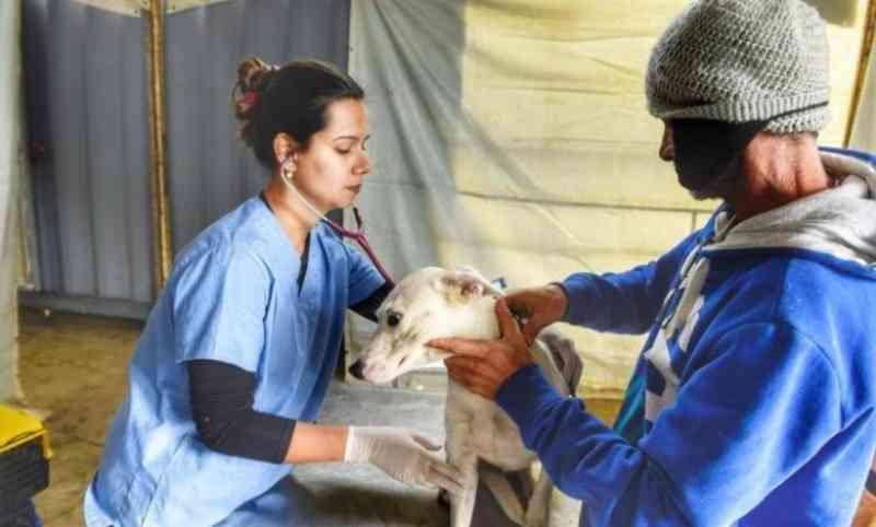 PAIS castrará 550 animais em Campo Mourão (PR) nos dias 5, 6 e 7 de julho