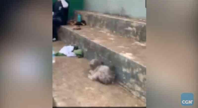 Vídeo mostra indivíduo maltratando cachorro na Praça Wilson Joffre, em Cascavel, PR
