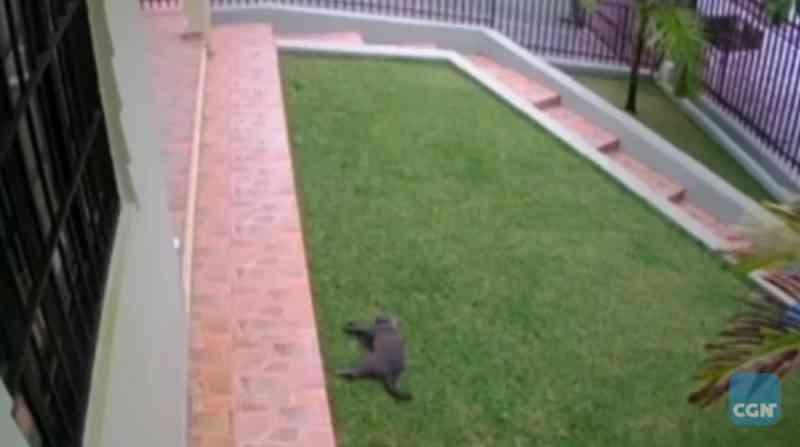 Maus tratos: internauta faz desabafo, após gato de estimação morrer envenenado
