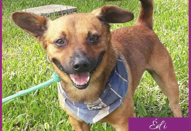 Cachorros resgatados em Curitiba (PR) poderão ser adotados em live pelo Facebook