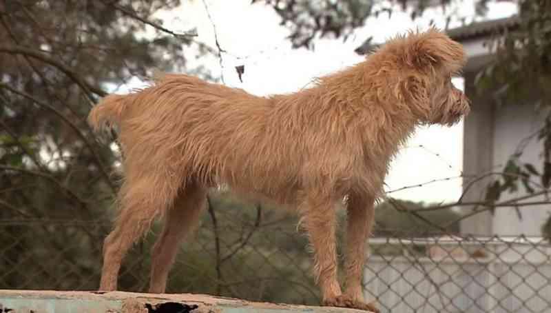 Casal de Curitiba (PR) adota mais de 130 cachorros abandonados