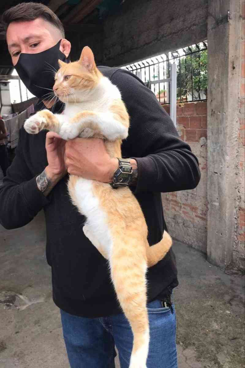 Homem é autuado por maus-tratos após soltar fumaça de cigarro de maconha em gato; assista ao vídeo