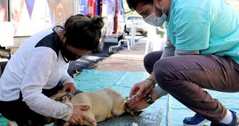 Londrina (PR) credenciará clínicas veterinárias para atender animais vítimas de maus-tratos