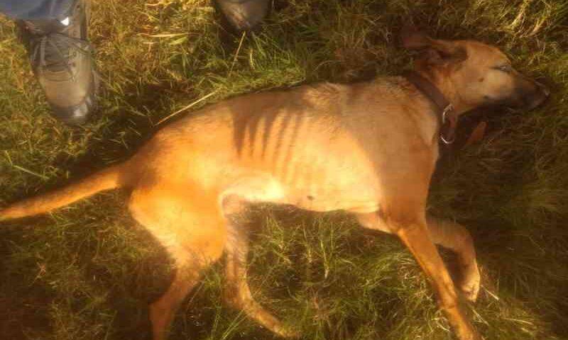 Homem é denunciado por maus-tratos a cão em Luiziana, PR