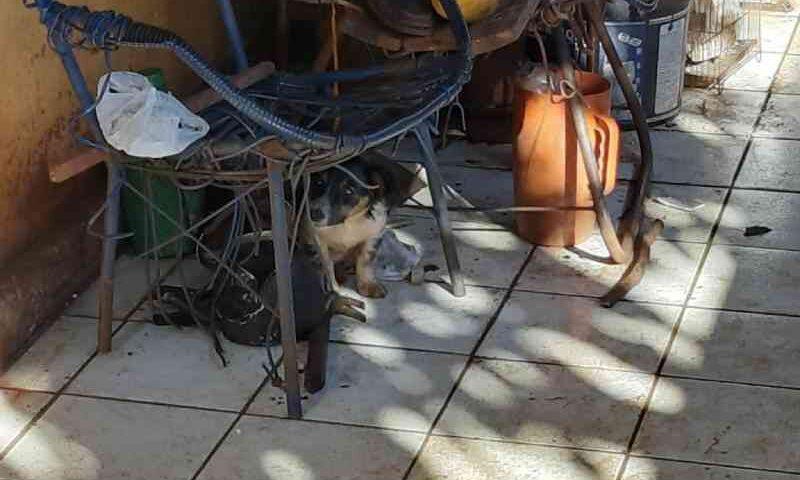 BPFron apreende homem por maus-tratos aos animais no interior de Marechal Rondon, PR