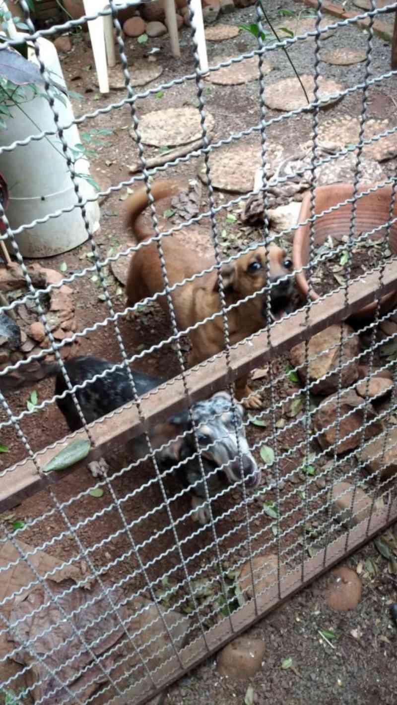 Após denúncia de maus-tratos, Vigilância Sanitária recolhe animais em Nova Santa Rosa, PR