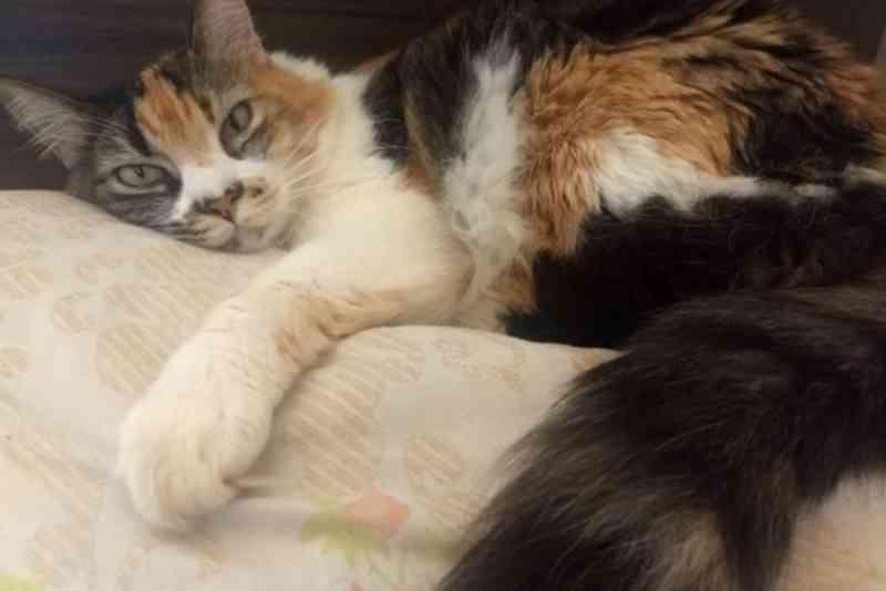 Famílias que têm CadÚnico podem se inscrever para castrar animais gratuitamente em Paranavaí, PR