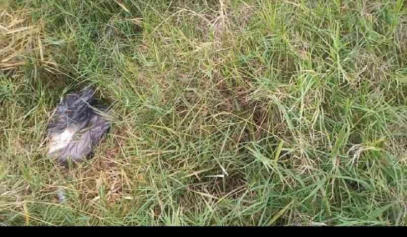 Cachorro pode ter sido asfixiado até a morte em Ponta Grossa, PR