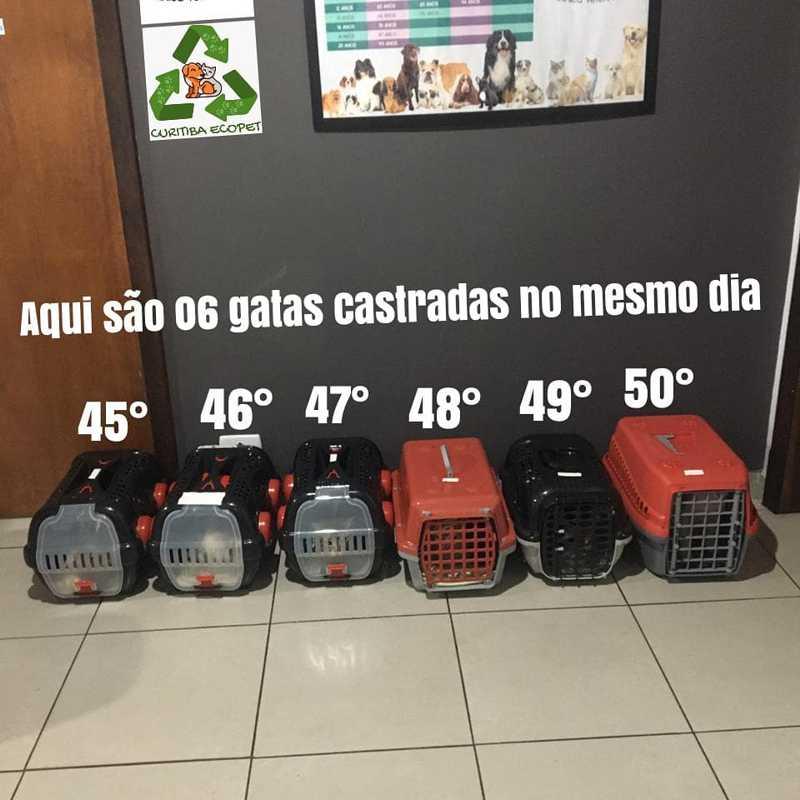 Voluntário arrecada milhares de tampinhas plásticas para ajudar animais abandonados nas ruas de Curitiba