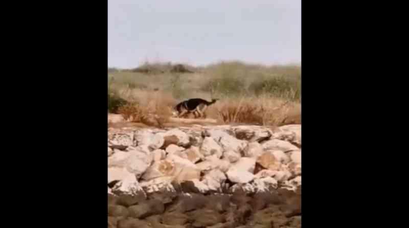 PAN condena ataque 'deliberado' de cães a colónia de gatos em Lagos, Portugal; imagens fortes