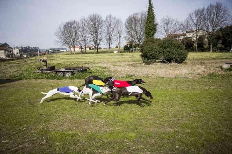 Portugal: Iniciativa de cidadãos para proibir corridas de cães já consegue ser discutida no Parlamento
