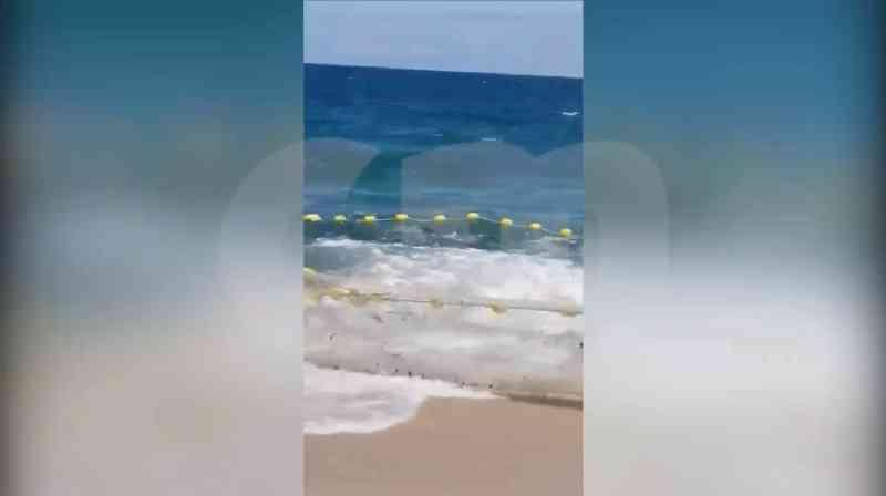 Golfinhos em agonia depois de serem apanhados por rede de pesca na Praia de Mira, em Portugal