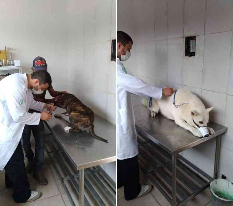 Clínica veterinária popular volta a funcionar em Iguaba Grande, no RJ