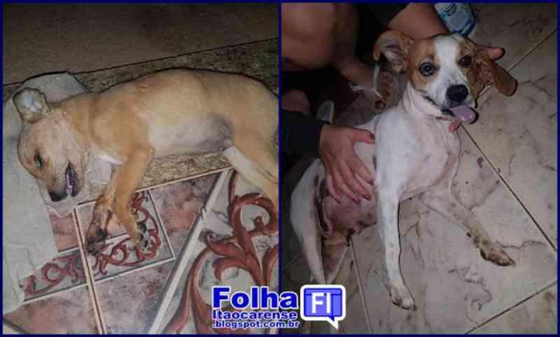 Mais quatro cães são mortos por envenenamento em Itaocara, RJ