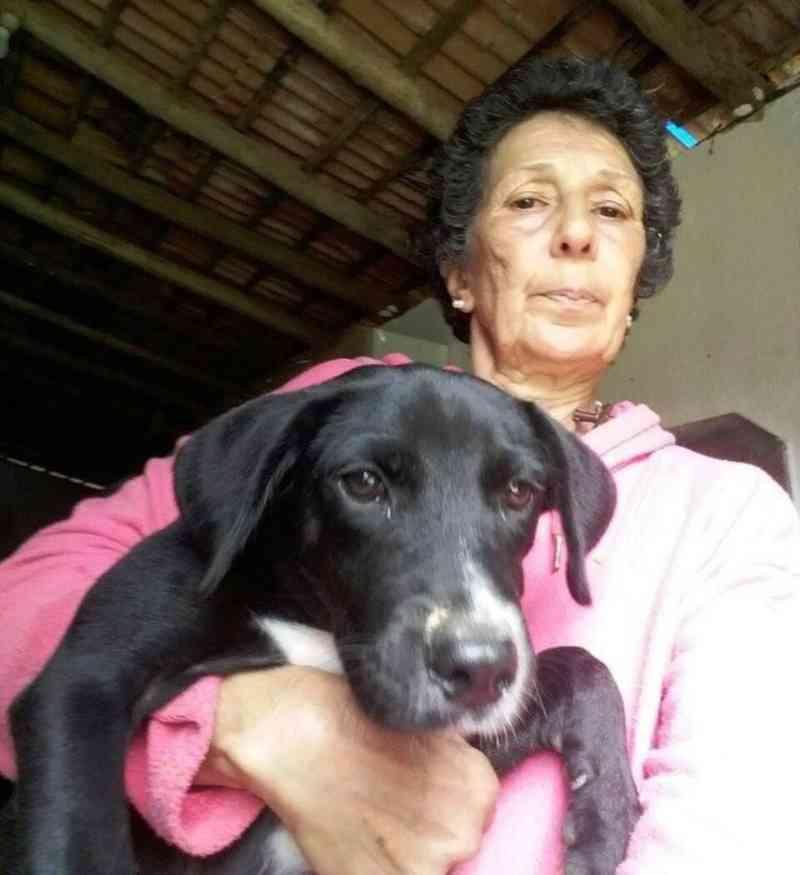 Cuidadora perde a luta contra o câncer e 55 animais são colocados para adoção em Nova Friburgo, RJ
