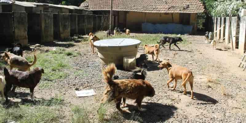 Protetora adoece e voluntários tentam doar cerca de 80 cachorros de abrigo, em Nova Friburgo, RJ