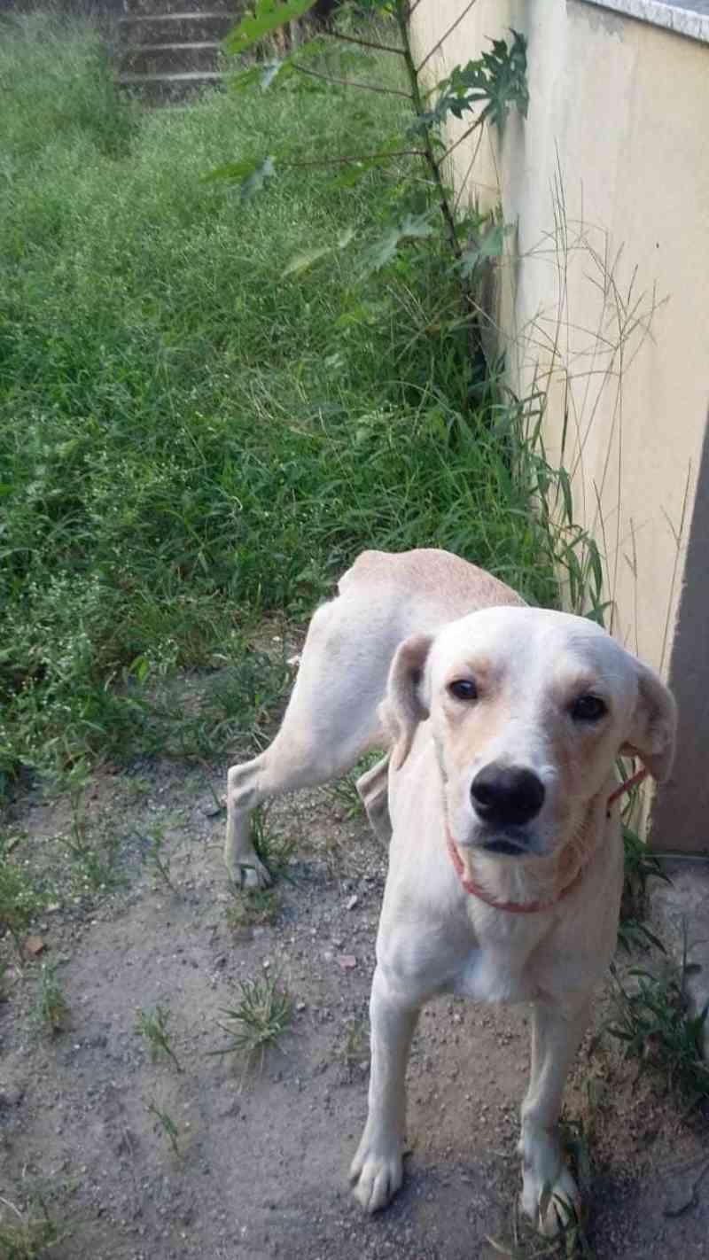 Cão abandonado se recupera totalmente de acidente e espera adoção em São Gonçalo, RJ