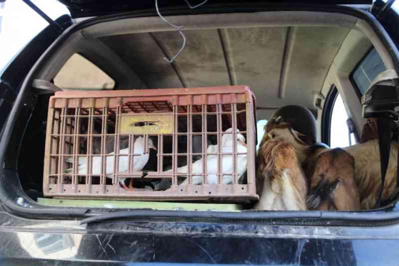 Animais são apreendidos na barreira sanitária em Volta Redonda, RJ