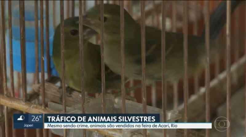 Animais silvestres ameaçados de extinção são vendidos em feiras livres no RJ sem repressão