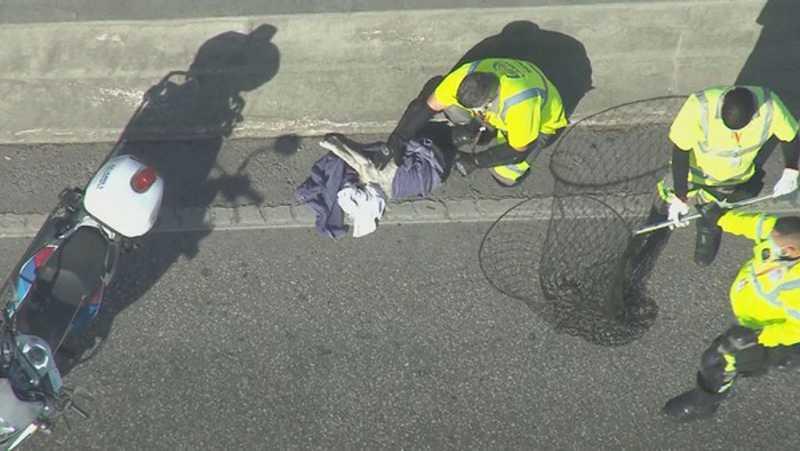 Rio: imagens mostram motoristas parando Linha Amarela para resgatar cachorro perdido