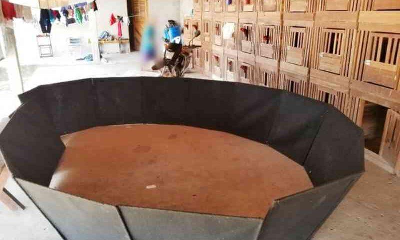 Polícia Civil apreende mais de 100 galos usados em rinha na Grande Natal, RN