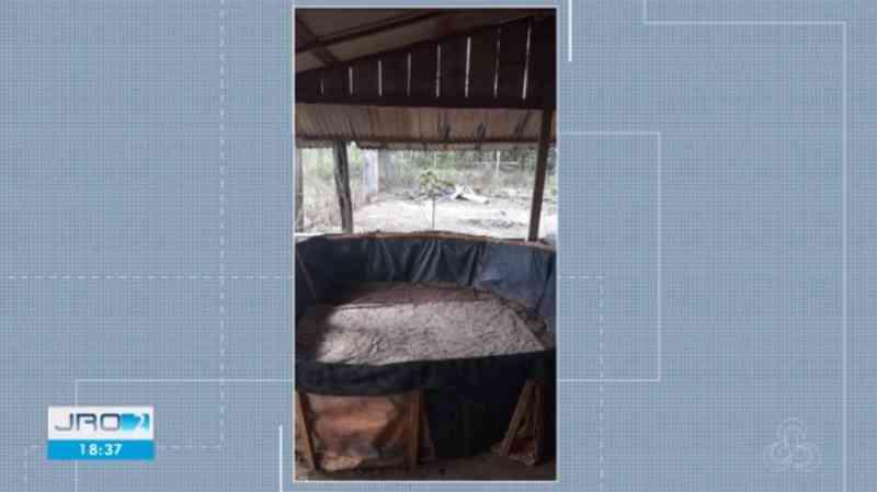 Polícia flagra rinha de galo, encontra aves mortas e prende 4 suspeitos em Cujubim, RO