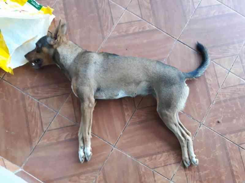 Cão e gatos encontrados mortos podem ter sido envenenados em Jaru, RO