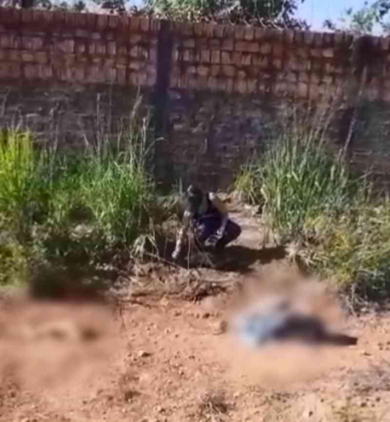 Cães e gatos são achados mortos em terreno baldio de Porto Velho, RO