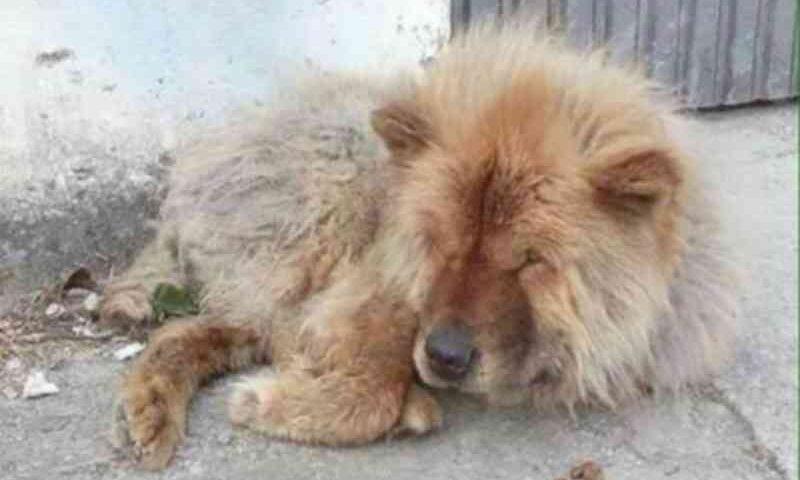 Homem atira três cães com as patas amarradas dentro de rio em Vilhena, RO; dois morreram