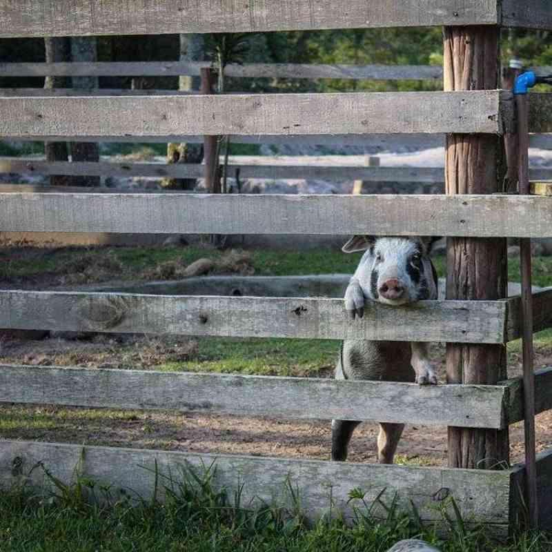 Protetores lutam para garantir dignidade animal em meio à pandemia