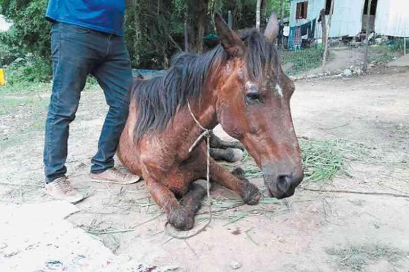 ONG se posiciona contra isenção de multa a tutores de animais resgatados em Santa Cruz do Sul, RS