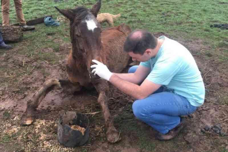 Meio Ambiente, Corsan e lideranças da causa animal discutem medidas contra abandono de equinos em Santa Cruz do Sul, RS