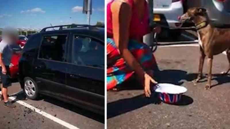 Grupo de pessoas quebra vidro de carro para salvar cachorro deixado no calor de 43 ºC no Reino Unido
