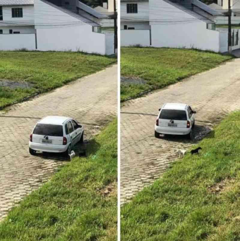 Câmeras flagraram casal abandonando filhotinhos na Ressacada, em Itajaí, SC; polícia investiga